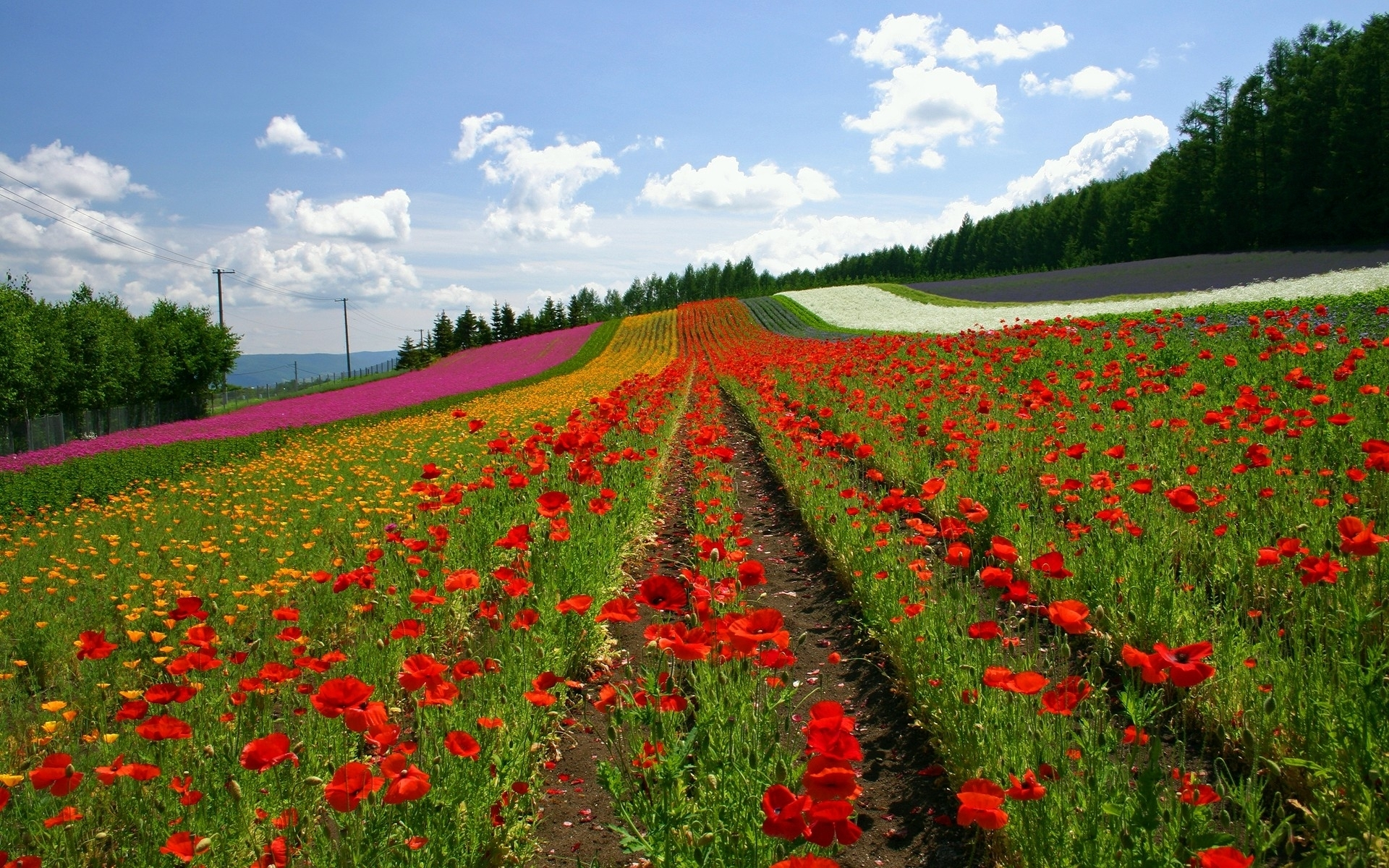 6521 download wallpaper Plants, Landscape, Flowers screensavers and pictures for free