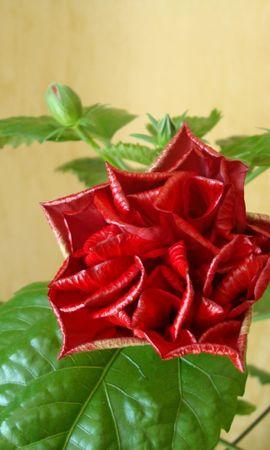 41673 descargar fondo de pantalla Plantas, Flores: protectores de pantalla e imágenes gratis