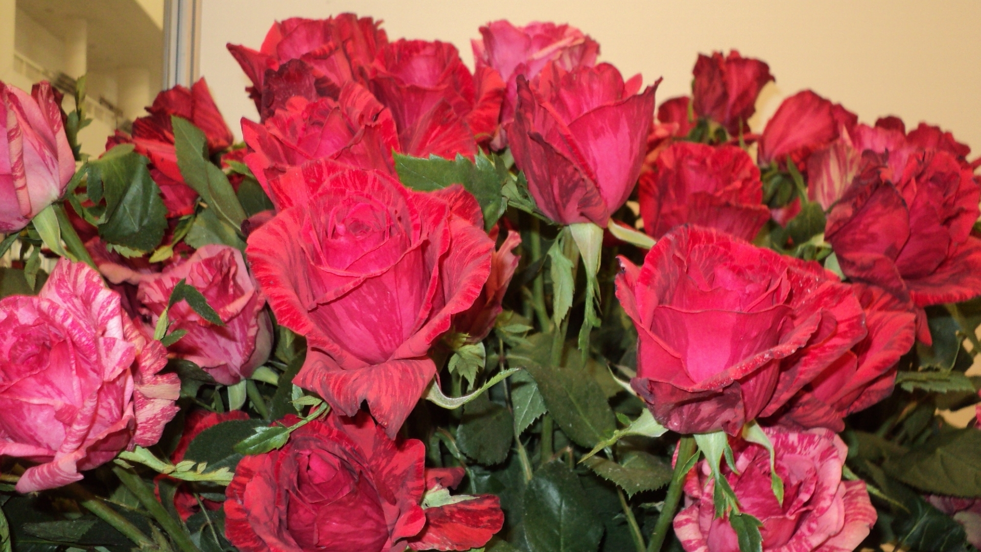 45909 скачать обои Растения, Цветы, Розы - заставки и картинки бесплатно