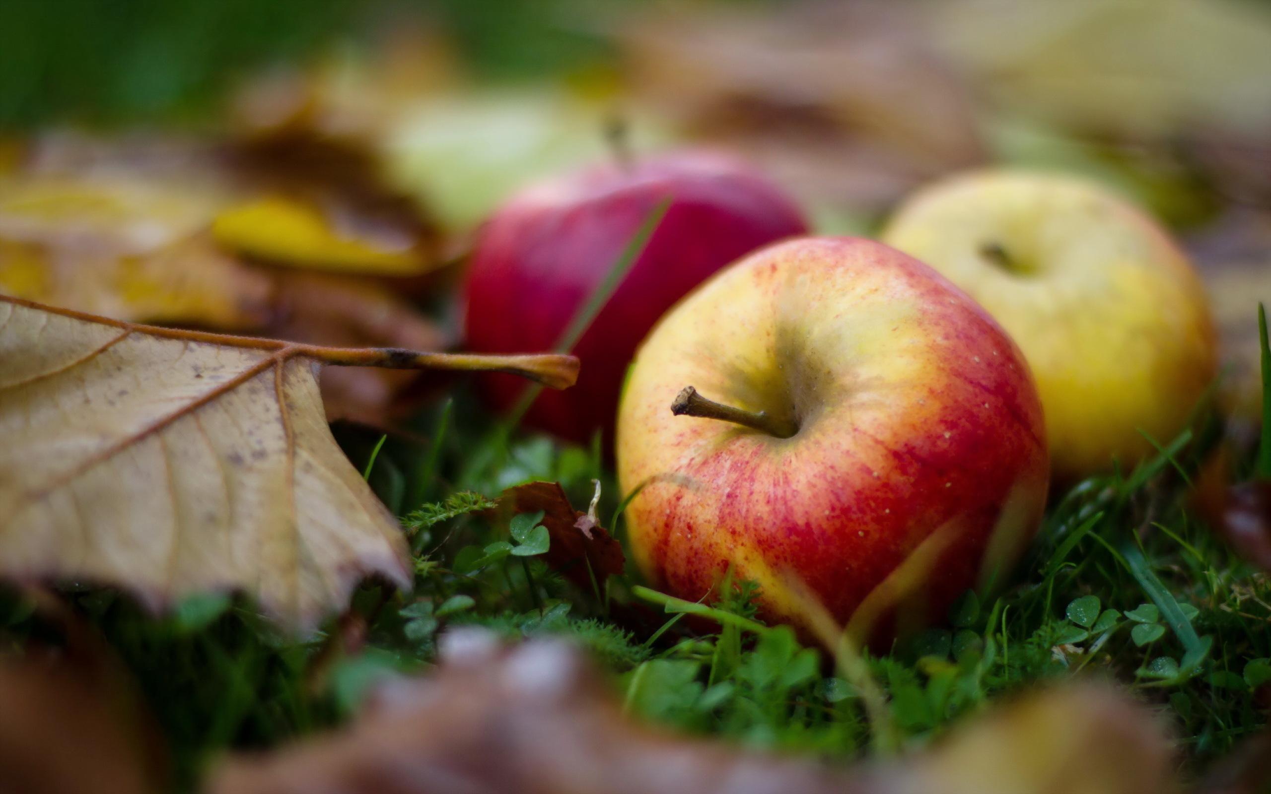25413 скачать обои Растения, Фрукты, Еда, Осень, Листья, Яблоки - заставки и картинки бесплатно