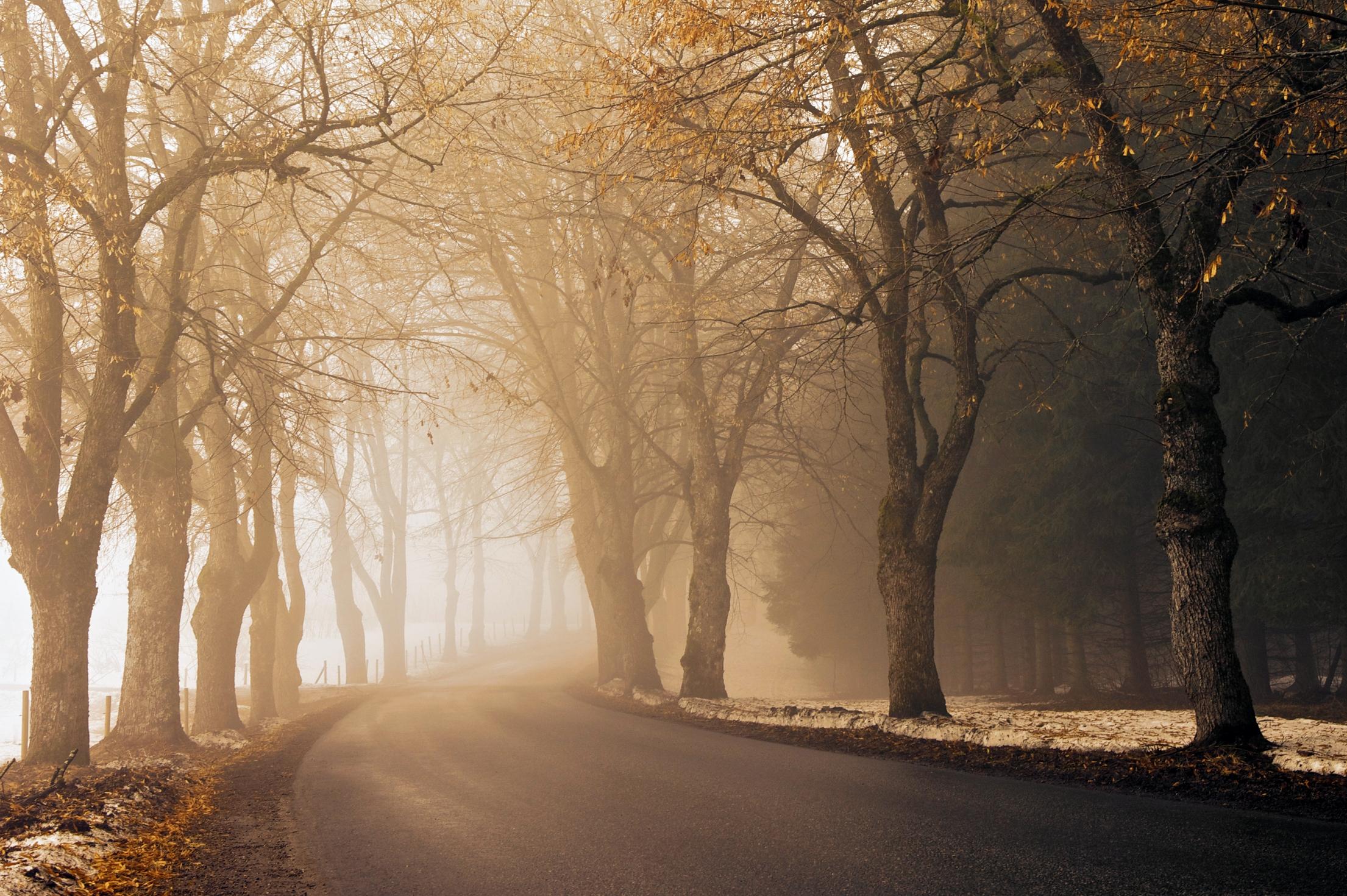 132594 скачать обои Асфальт, Природа, Осень, Дорога, Поворот, Туман, Аллея, Утро, Мгла - заставки и картинки бесплатно