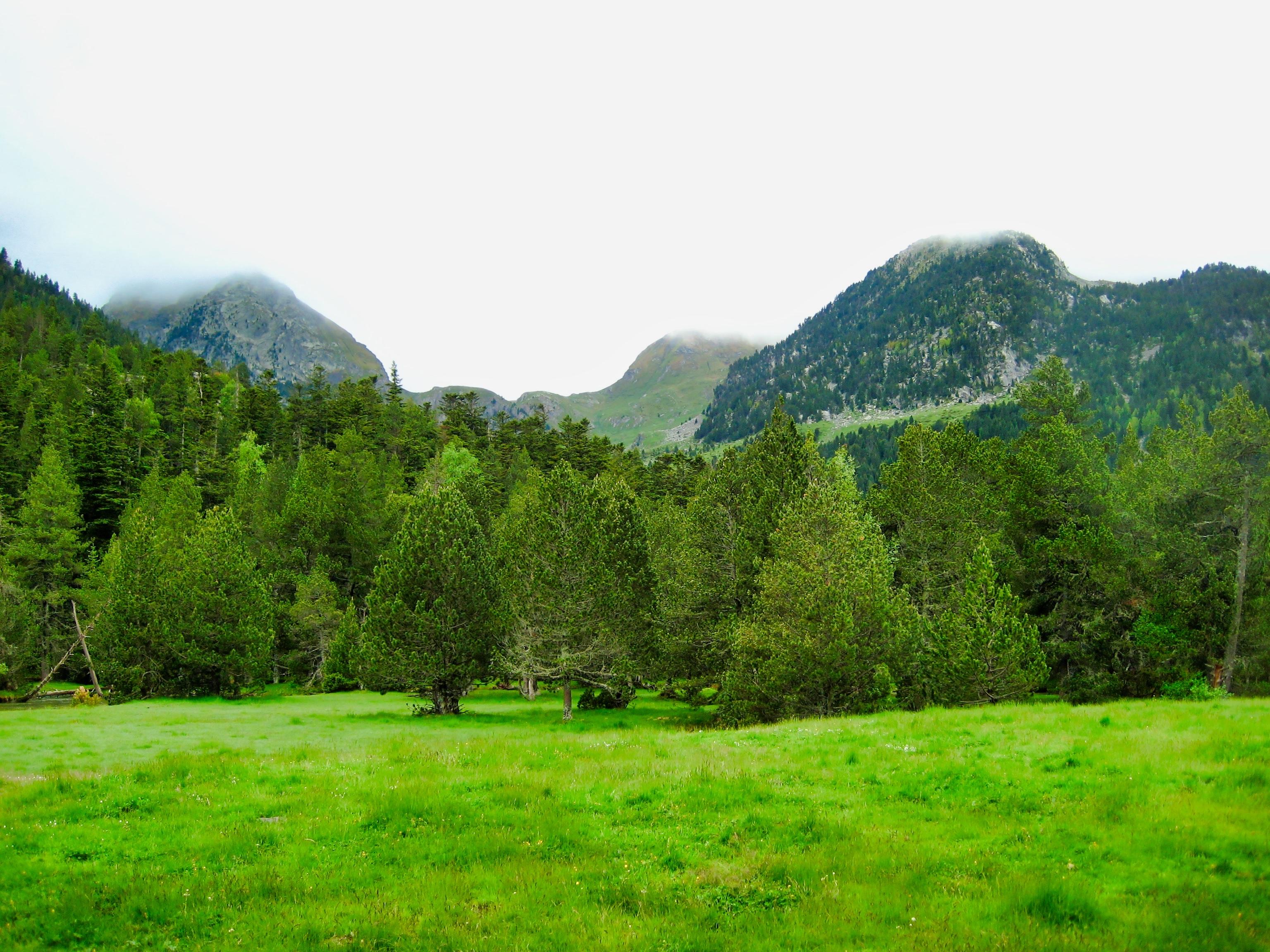 93271 скачать обои Зелень, Природа, Деревья, Трава, Горы, Лужайка - заставки и картинки бесплатно