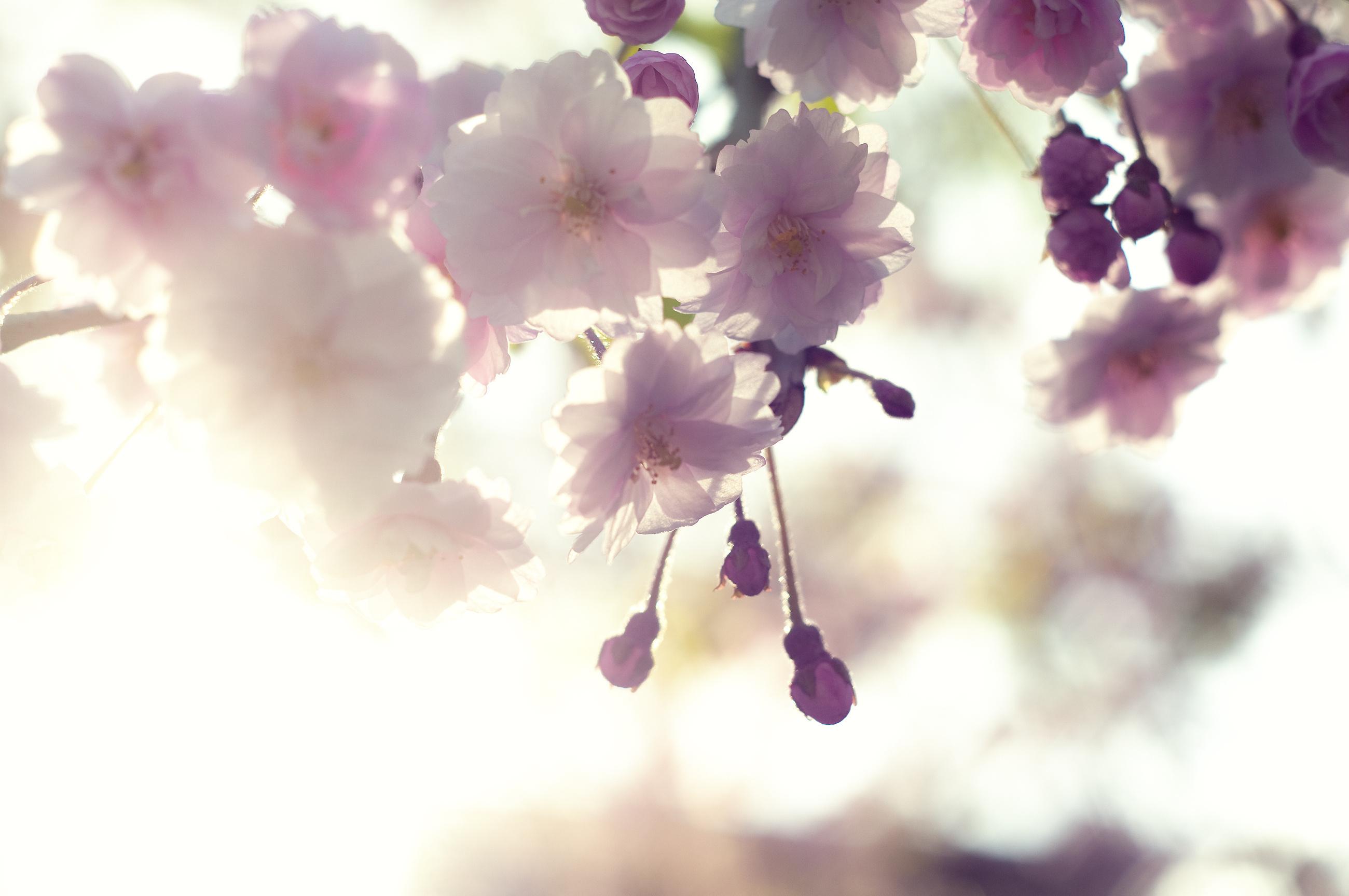 21011 скачать обои Растения, Цветы - заставки и картинки бесплатно