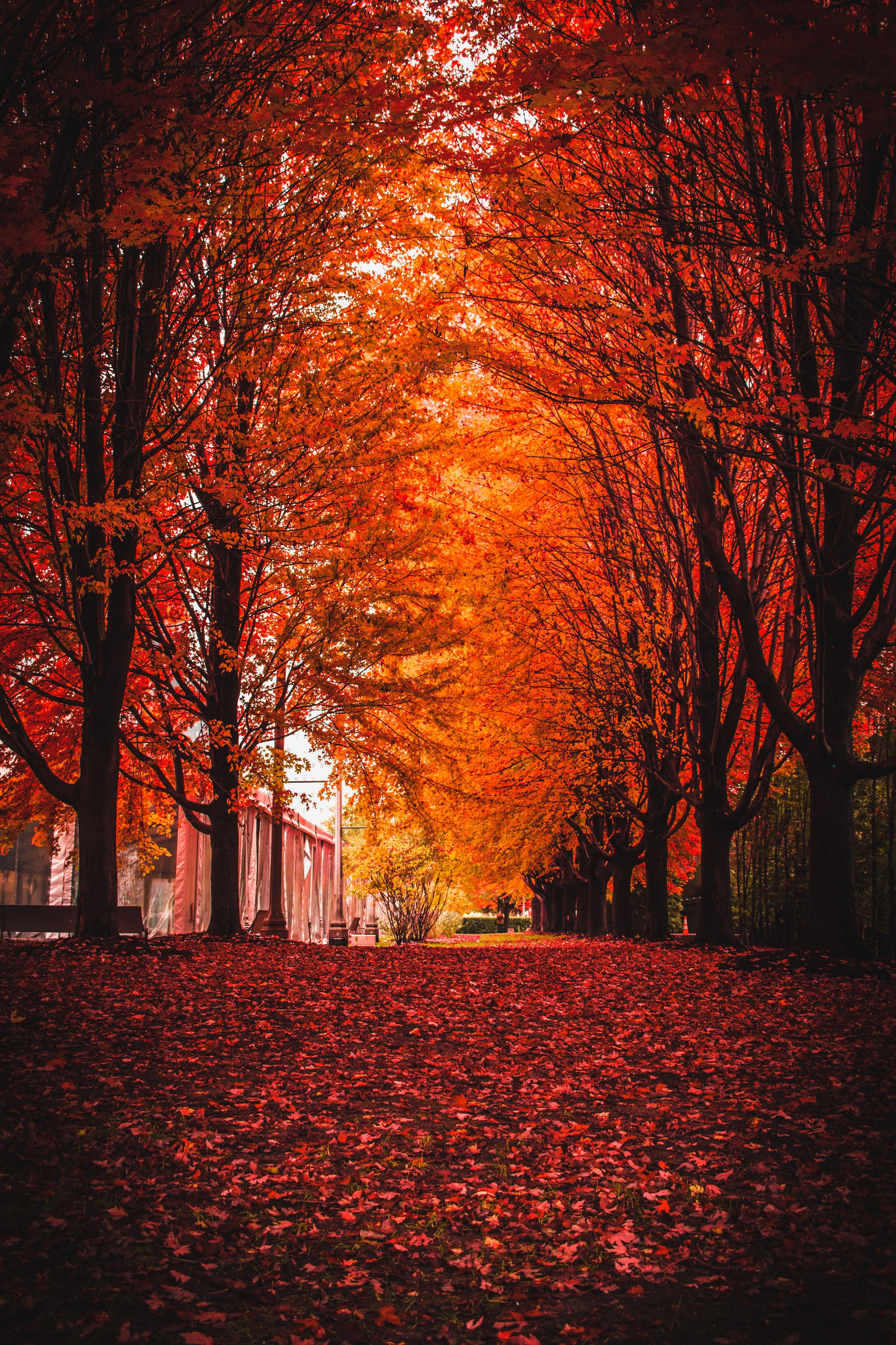 59719 скачать обои Природа, Осень, Парк, Деревья, Листва - заставки и картинки бесплатно