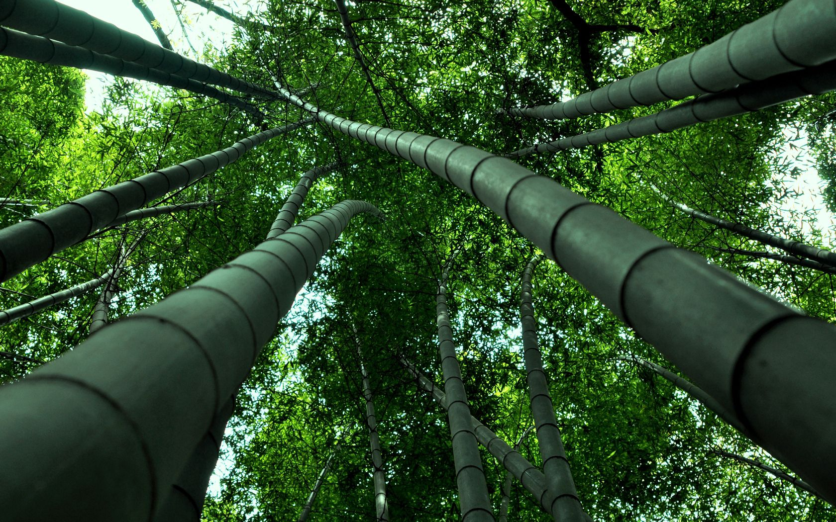 104991 download wallpaper Nature, Bamboo, View, From Below screensavers and pictures for free