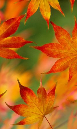 44660 Screensavers and Wallpapers Objects for phone. Download Autumn, Leaves, Objects pictures for free