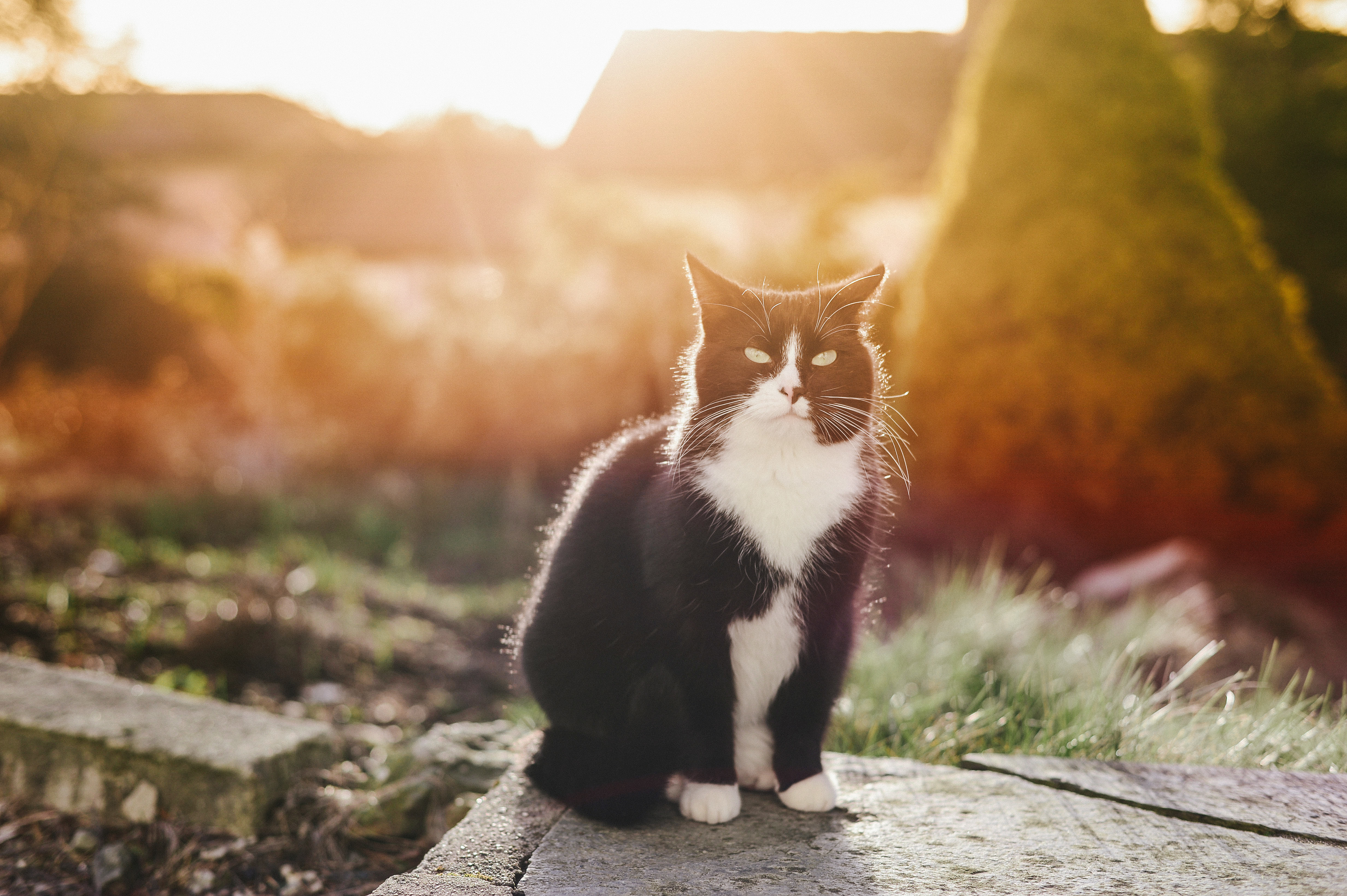 63050 download wallpaper Animals, Cat, Spotted, Spotty, Sunlight screensavers and pictures for free