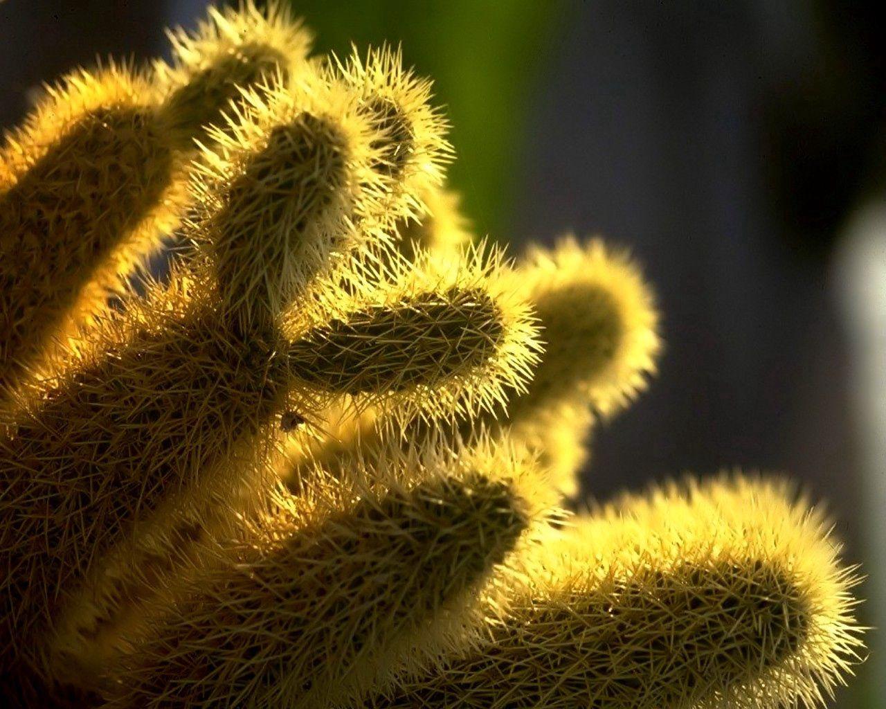 152155 descargar fondo de pantalla Macro, Cactus, Cacto, Brillar, Luz, Brillante, Espinas: protectores de pantalla e imágenes gratis
