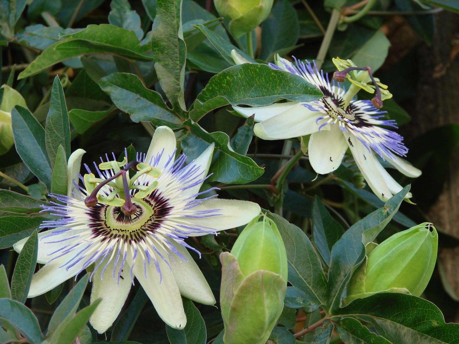 6327 скачать обои Растения, Цветы - заставки и картинки бесплатно