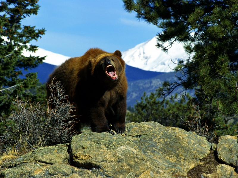 35260 Заставки и Обои Медведи на телефон. Скачать Медведи, Животные картинки бесплатно