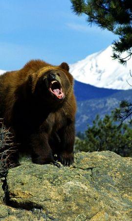 35260 baixar papel de parede Animais, Bears - protetores de tela e imagens gratuitamente