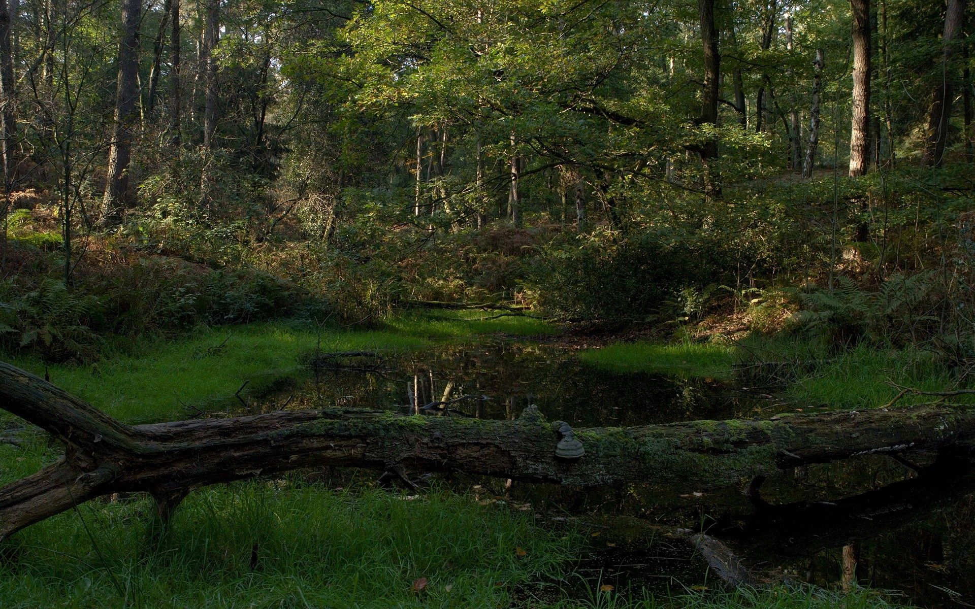 111306 download wallpaper Nature, Forest, Wood, Tree, Moss, Lake, Shadow, Cool, Coolness, Dead screensavers and pictures for free