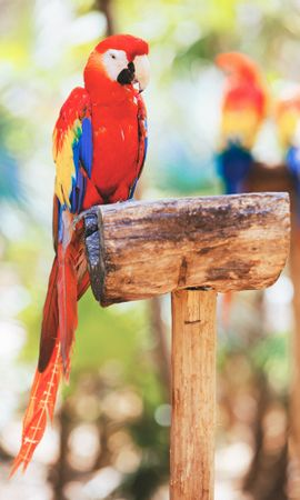 154160 download wallpaper Animals, Macaw, Parrots, Bird screensavers and pictures for free