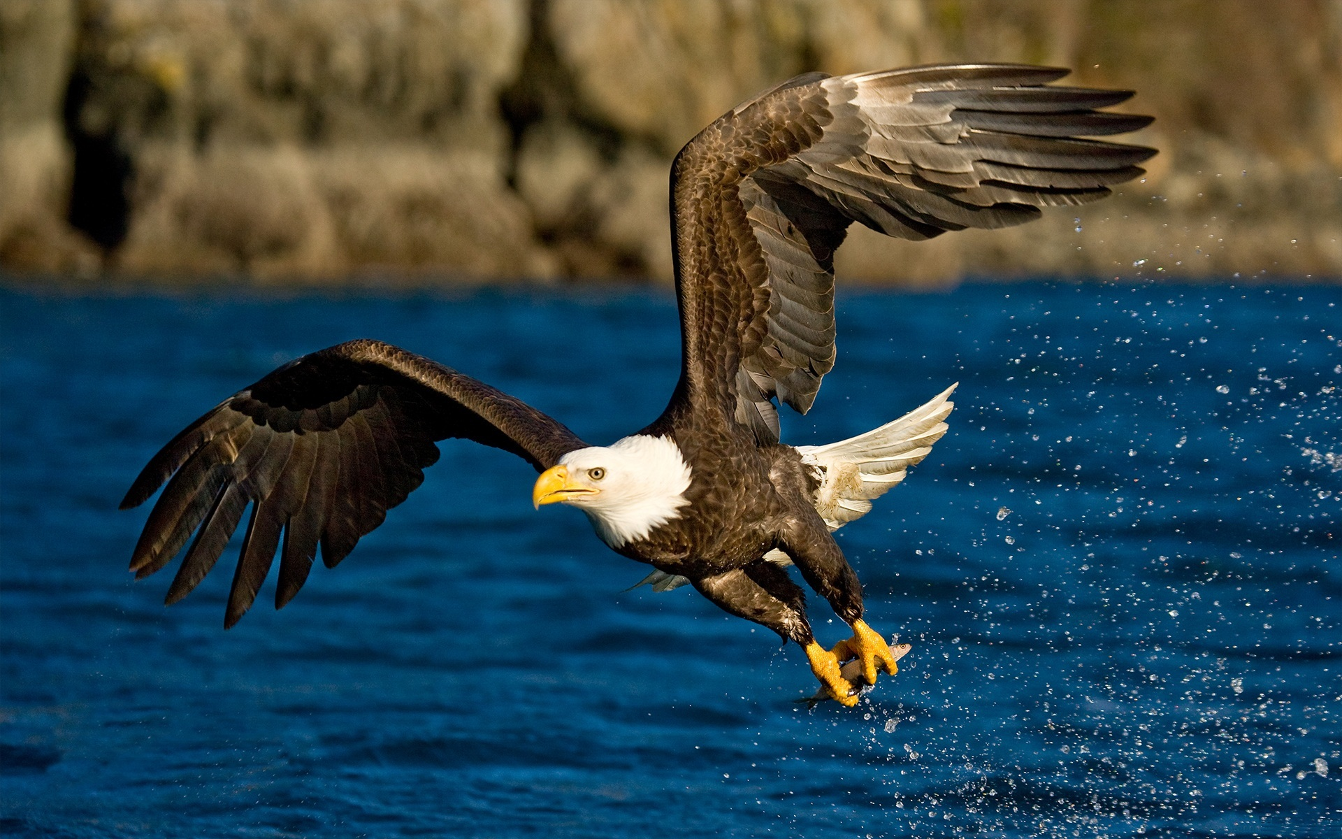 39071 download wallpaper Animals, Birds, Eagles screensavers and pictures for free