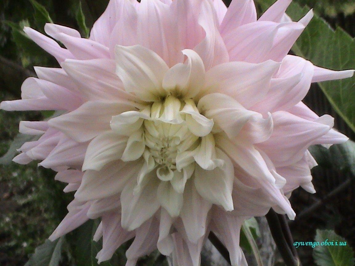 6307 скачать обои Растения, Цветы - заставки и картинки бесплатно