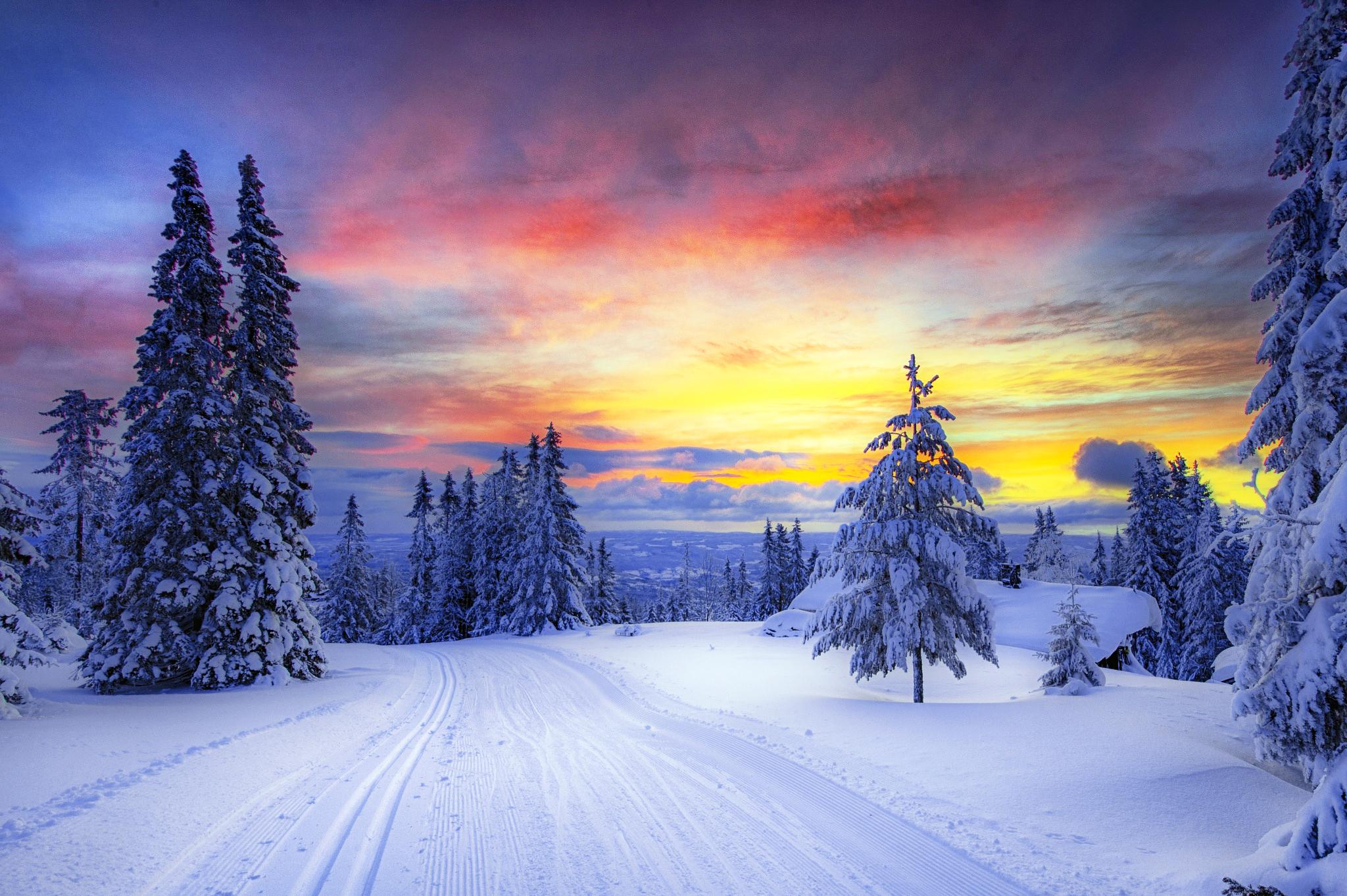 133913 скачать обои Снег, Зима, Норвегия, Лес, Природа, Деревья - заставки и картинки бесплатно