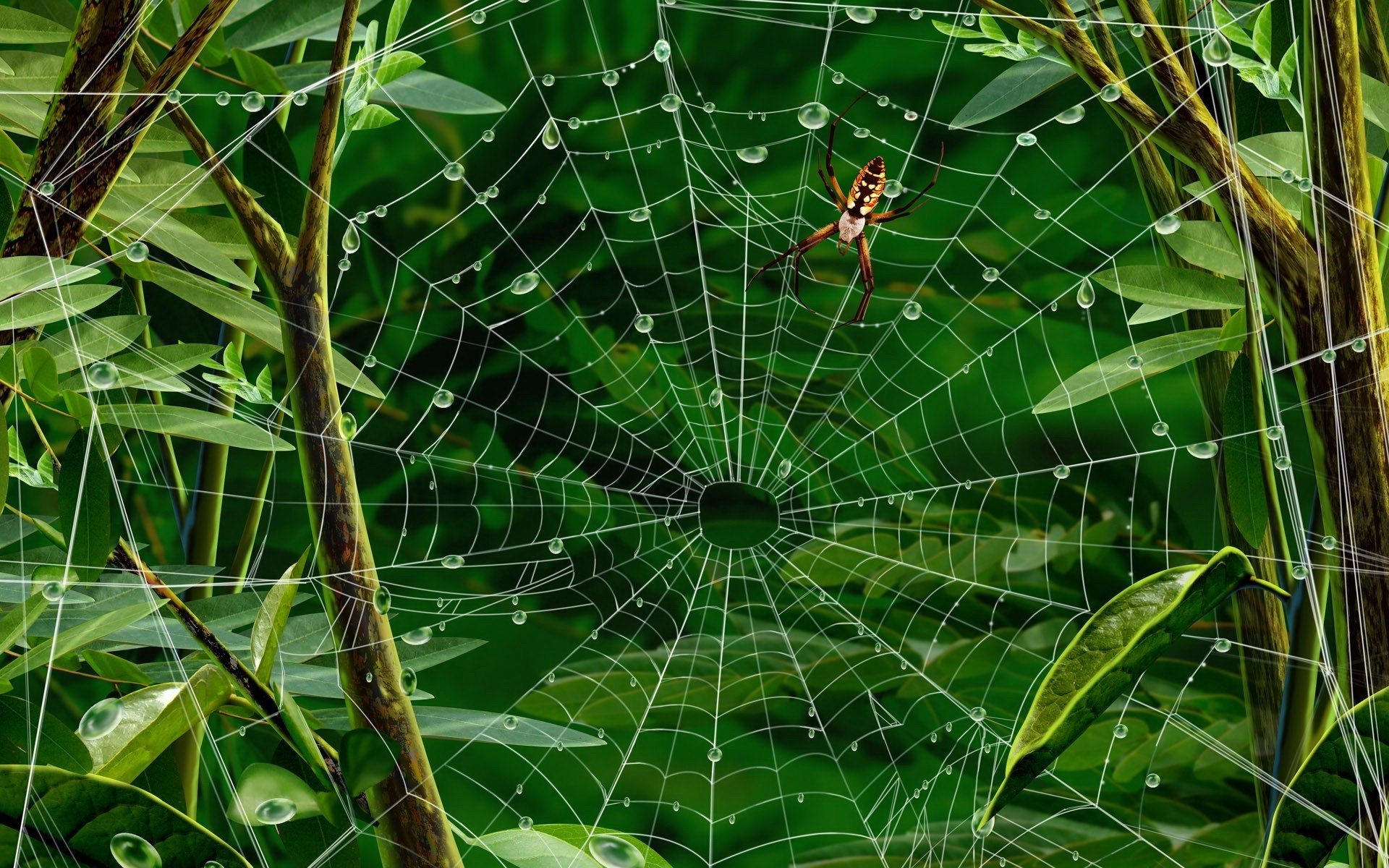 22705 download wallpaper Insects, Web, Spiders, Pictures screensavers and pictures for free