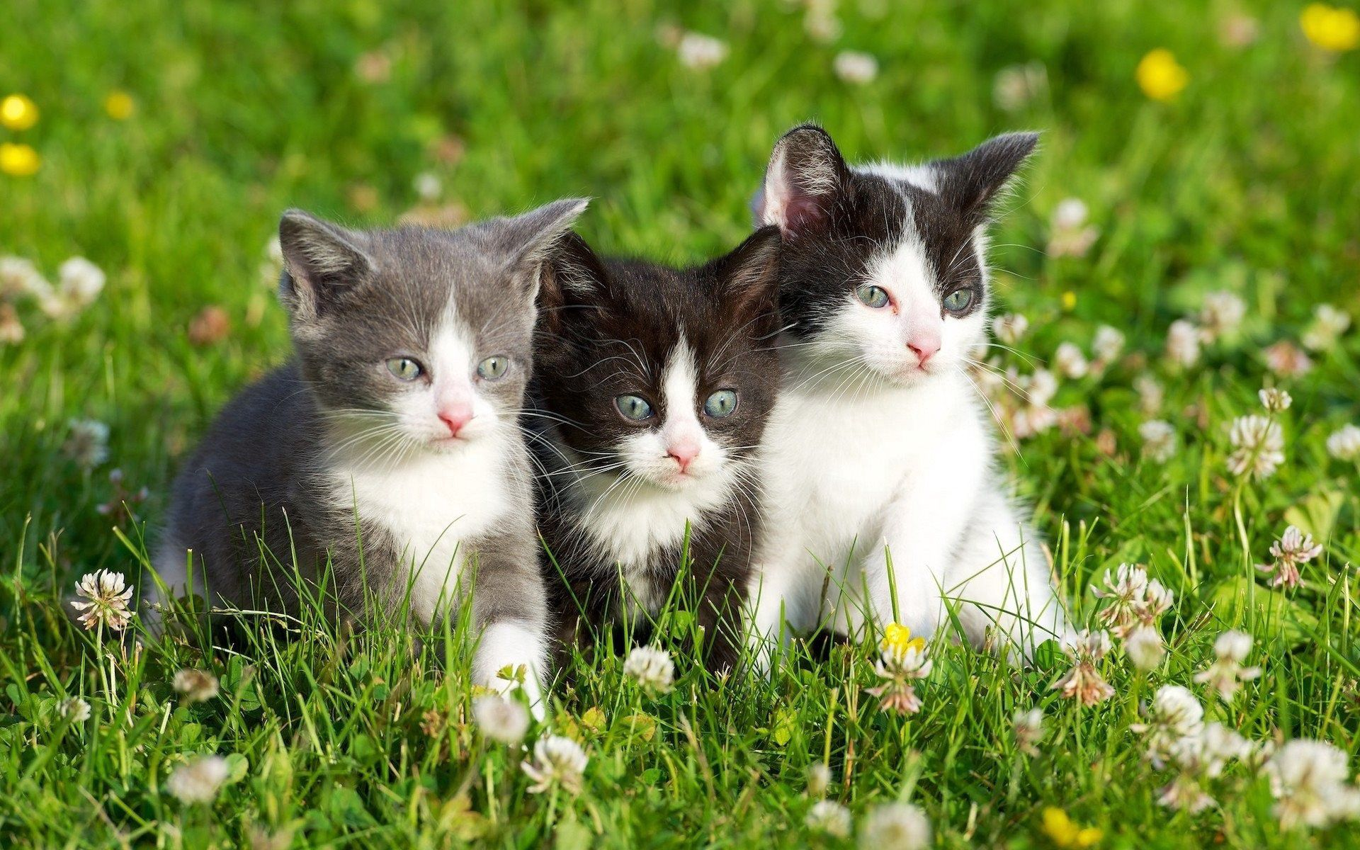 153071 Screensavers and Wallpapers Kittens for phone. Download Animals, Grass, Spotted, Three, Kittens pictures for free