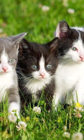 153071 download wallpaper Animals, Kittens, Grass, Spotted, Three screensavers and pictures for free