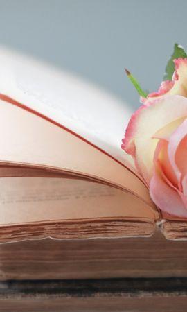 25680 скачать обои Растения, Цветы, Розы - заставки и картинки бесплатно