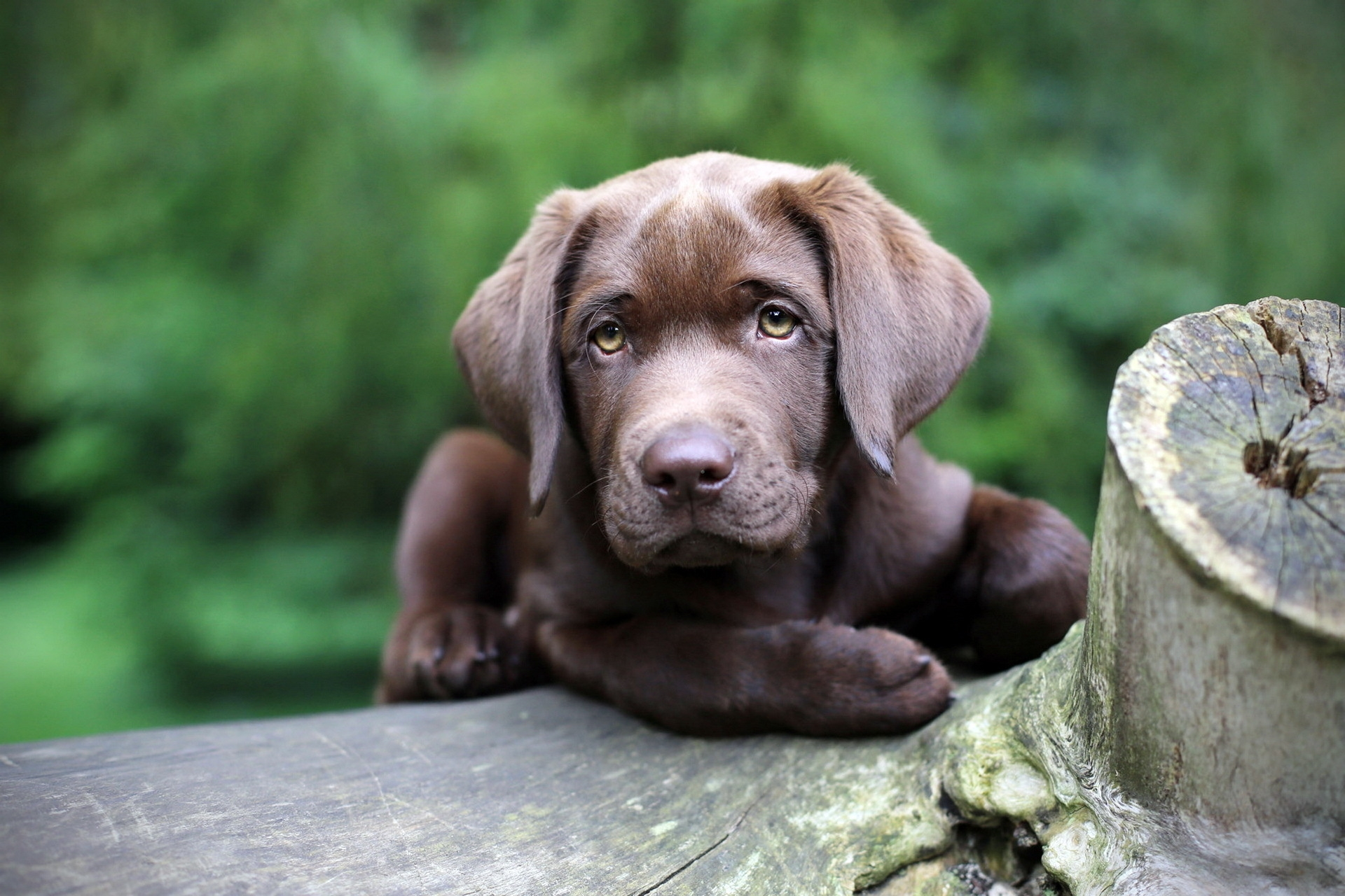 57485 download wallpaper Animals, Dog, Puppy, Muzzle, Sight, Opinion screensavers and pictures for free