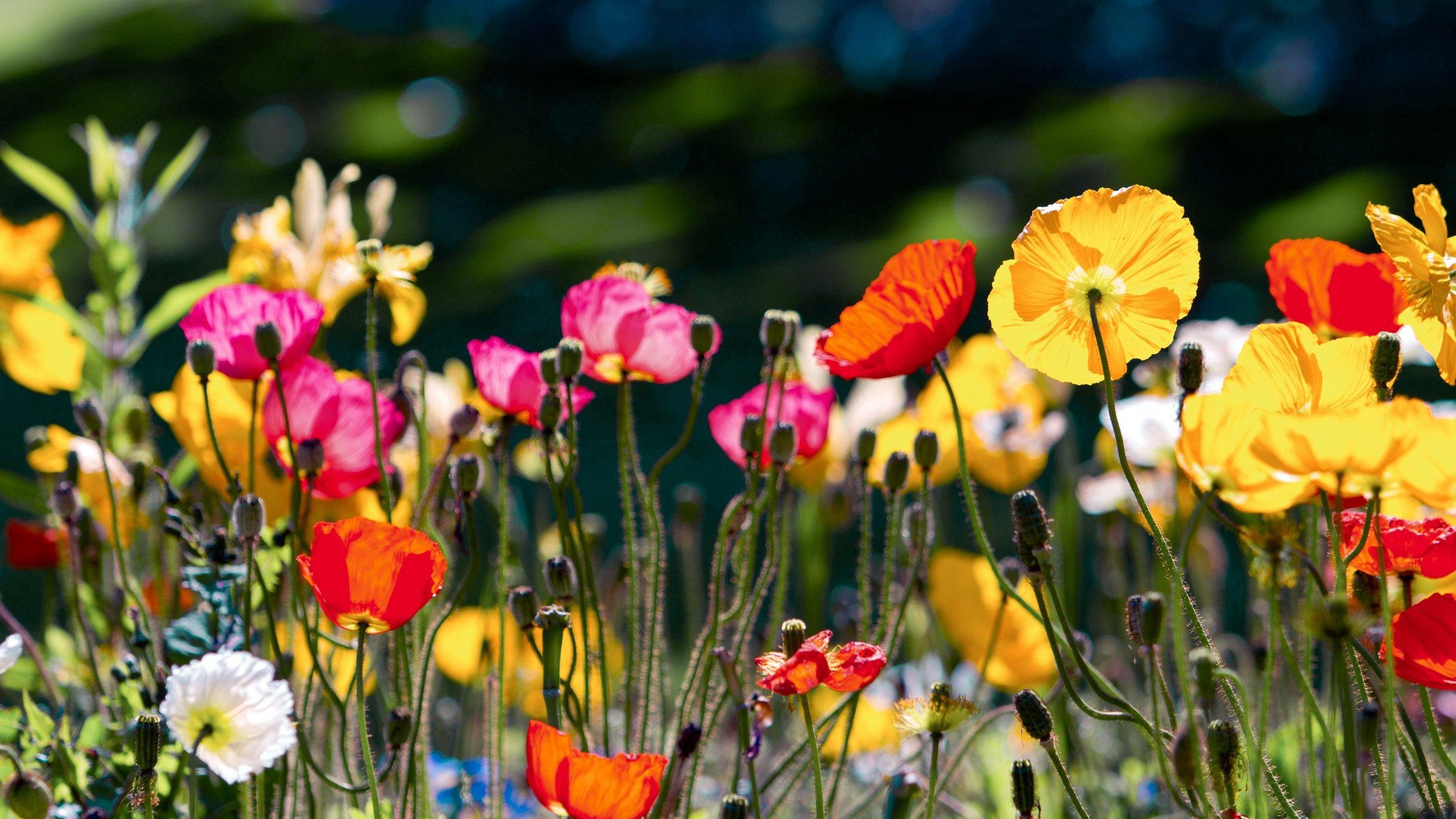 67471 Hintergrundbild 480x800 kostenlos auf deinem Handy, lade Bilder Blumen, Hell, Farbe, Polyana, Glade 480x800 auf dein Handy herunter