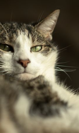144661 Screensavers and Wallpapers Funny for phone. Download Animals, Cat, Muzzle, Funny, Wool pictures for free