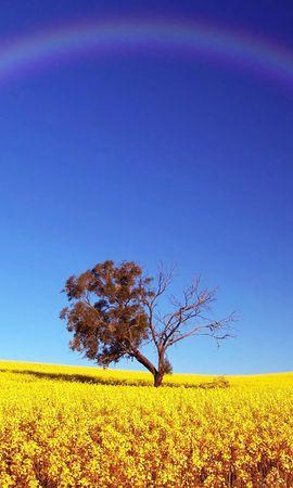 30113 скачать обои Пейзаж, Деревья, Поля, Радуга - заставки и картинки бесплатно