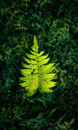 144918 скачать обои Природа, Папоротник, Листок, Зеленый, Растения - заставки и картинки бесплатно