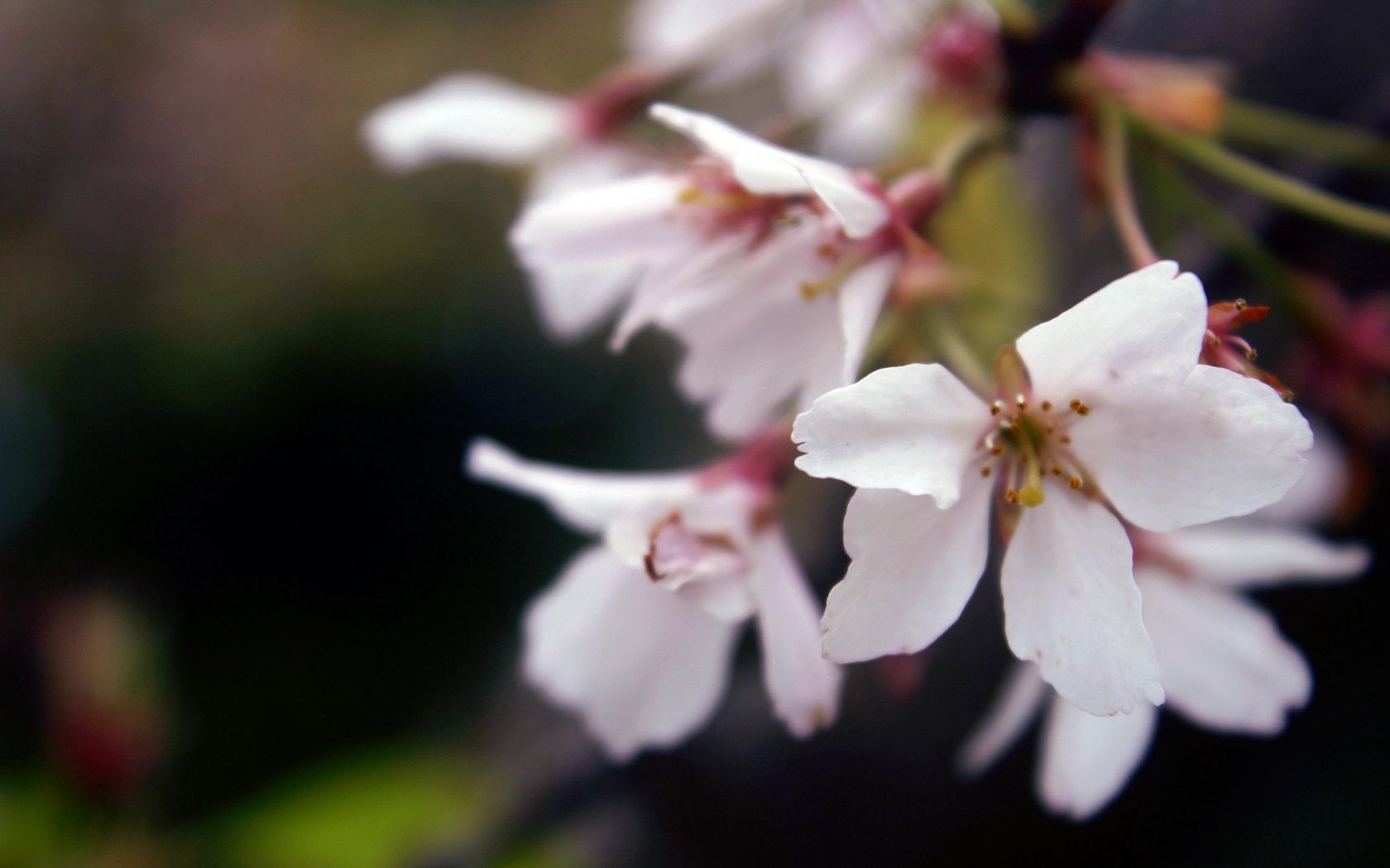 53193 Screensavers and Wallpapers Bloom for phone. Download Grass, Leaves, Macro, Bloom, Flowering, Branch pictures for free