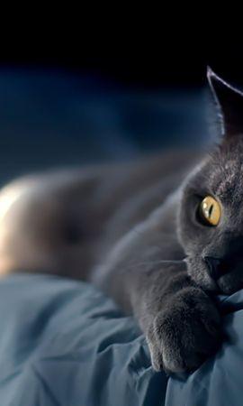 50071 скачать обои Животные, Кошки (Коты, Котики) - заставки и картинки бесплатно