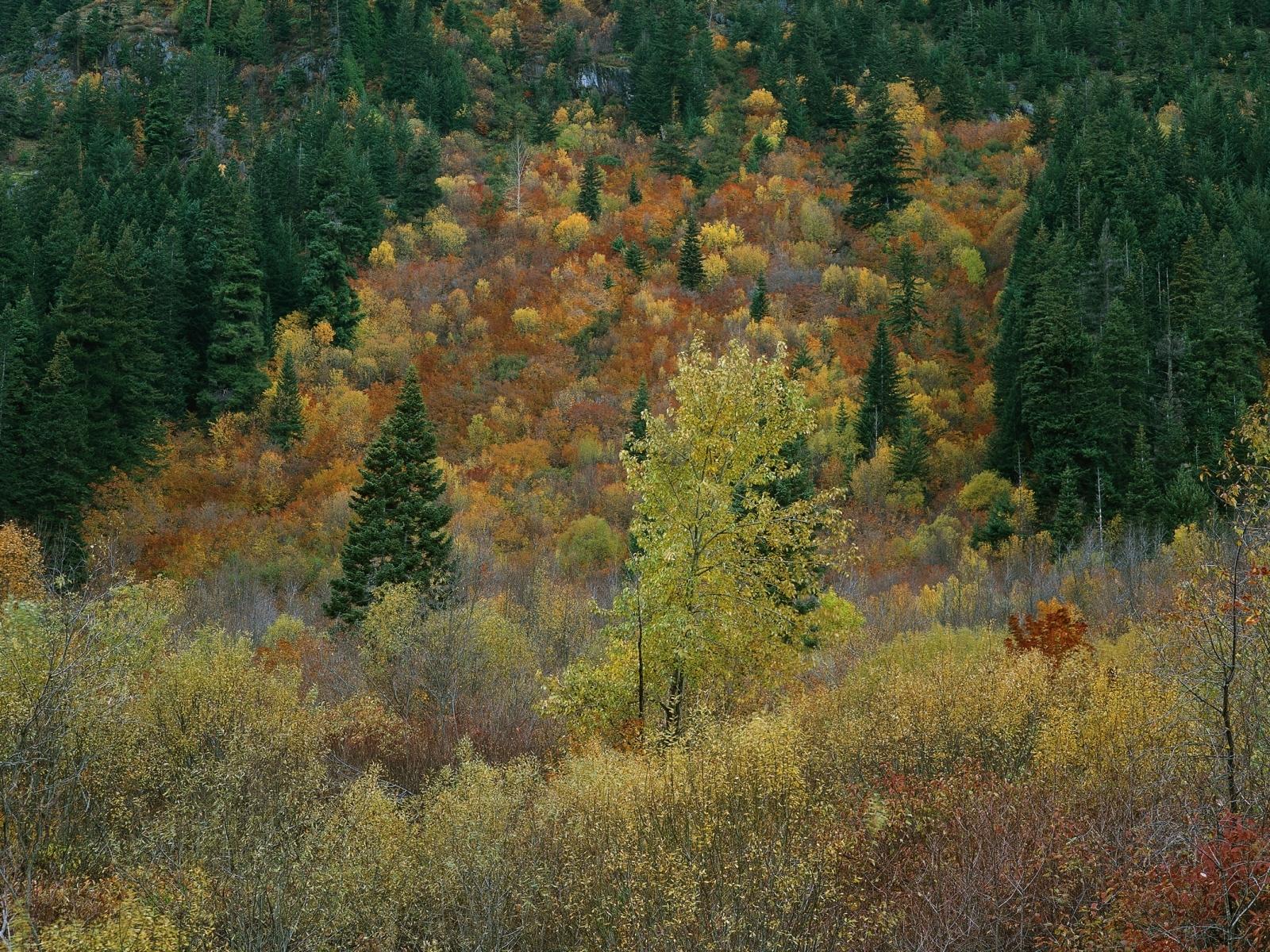 7772 скачать обои Пейзаж, Деревья, Осень - заставки и картинки бесплатно