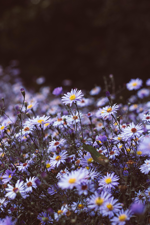 129635 скачать обои Цветы, Фиолетовый, Цветение, Дикий, Растения - заставки и картинки бесплатно