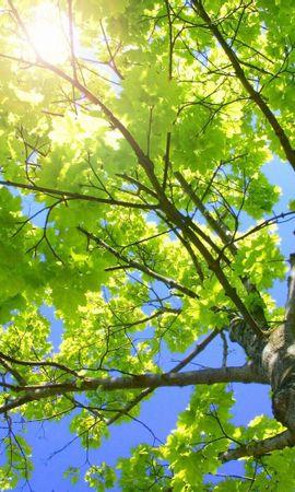 8539 скачать обои Пейзаж, Деревья, Листья, Солнце - заставки и картинки бесплатно