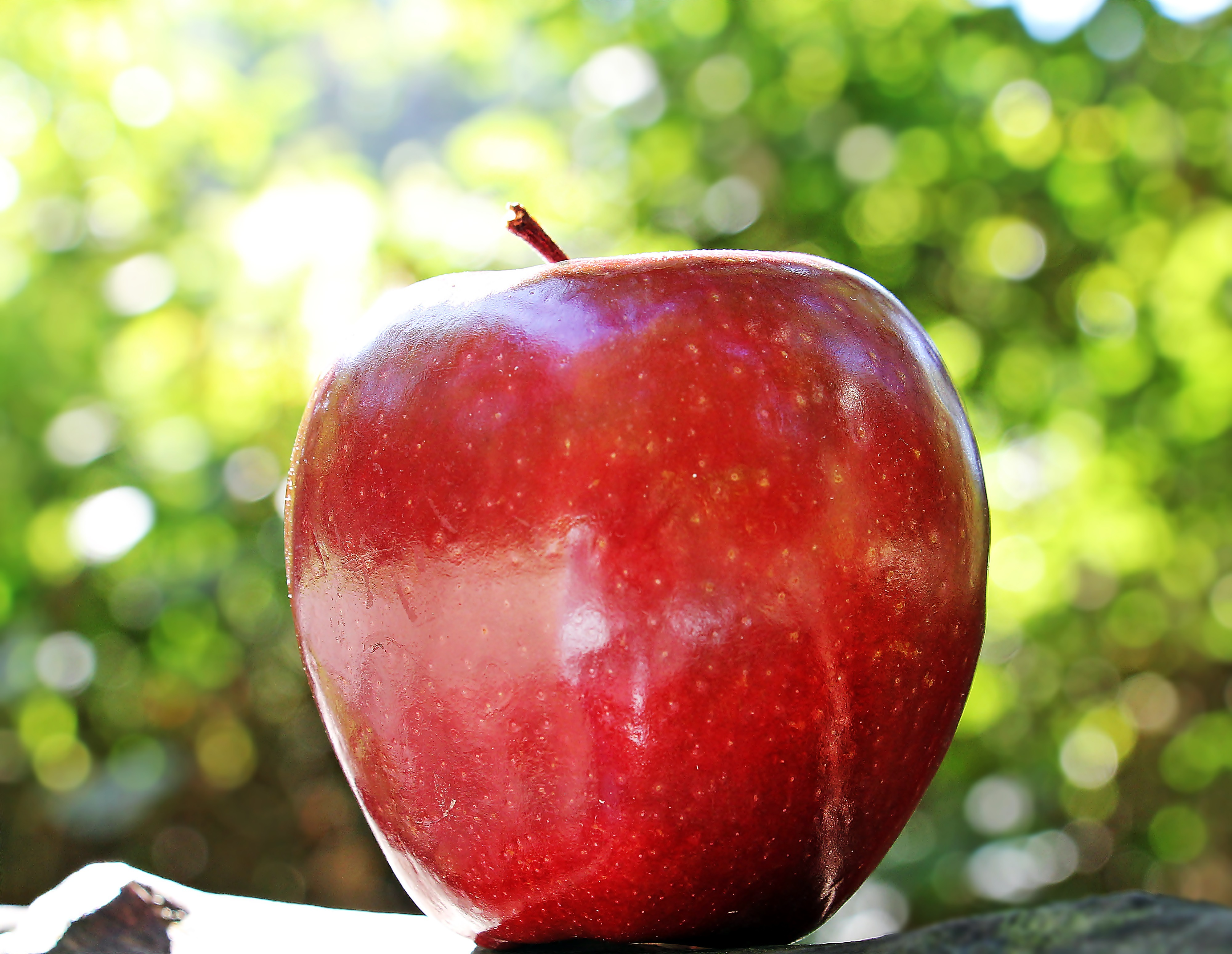 124957 Screensavers and Wallpapers Apple for phone. Download Food, Apple, Fruit, Ripe, Close-Up pictures for free
