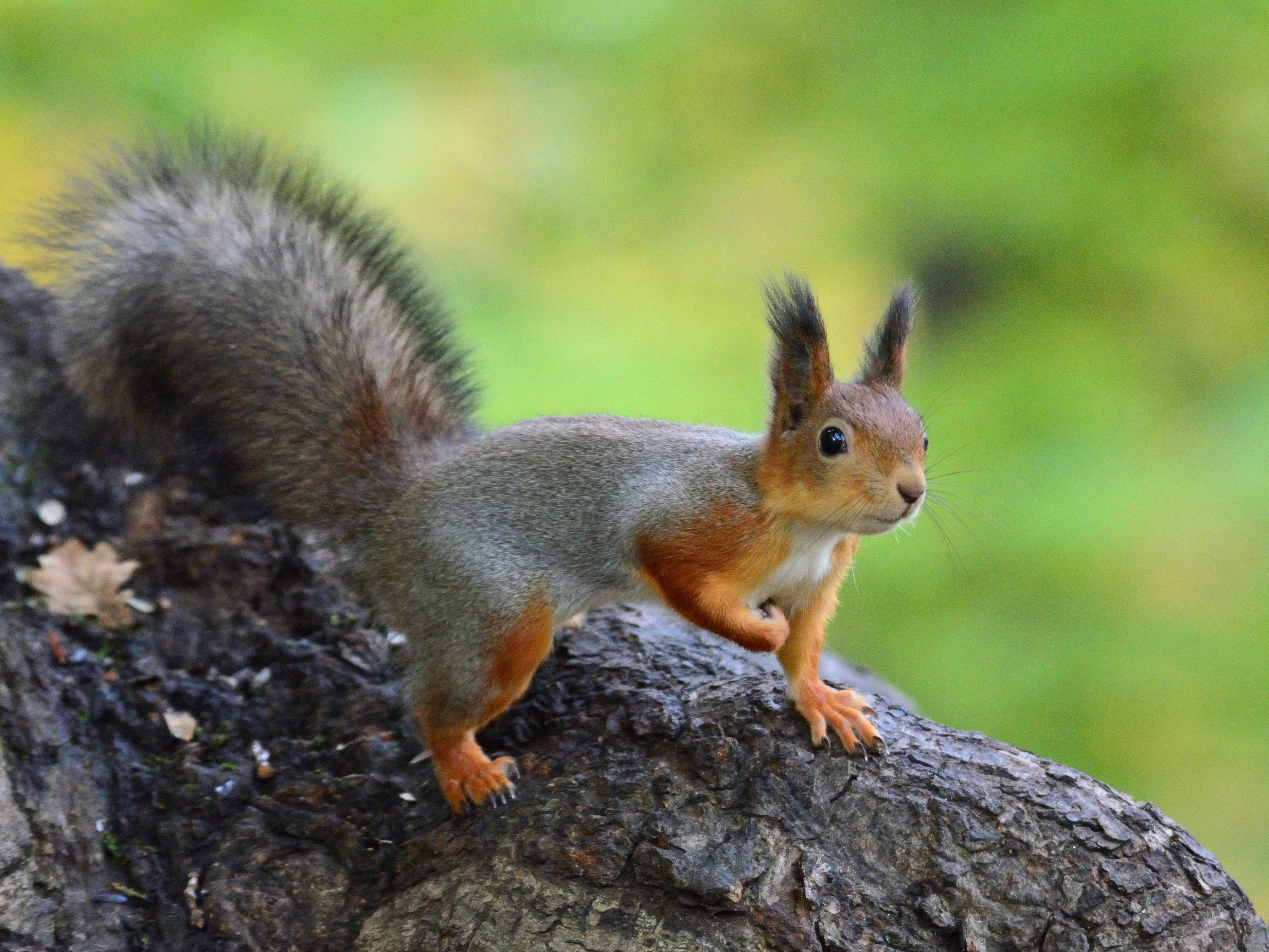 84404 download wallpaper Animals, Squirrel, Animal, Funny, Wildlife screensavers and pictures for free