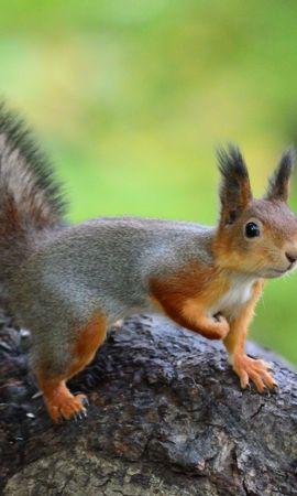 84404 Screensavers and Wallpapers Funny for phone. Download Animals, Squirrel, Animal, Funny, Wildlife pictures for free