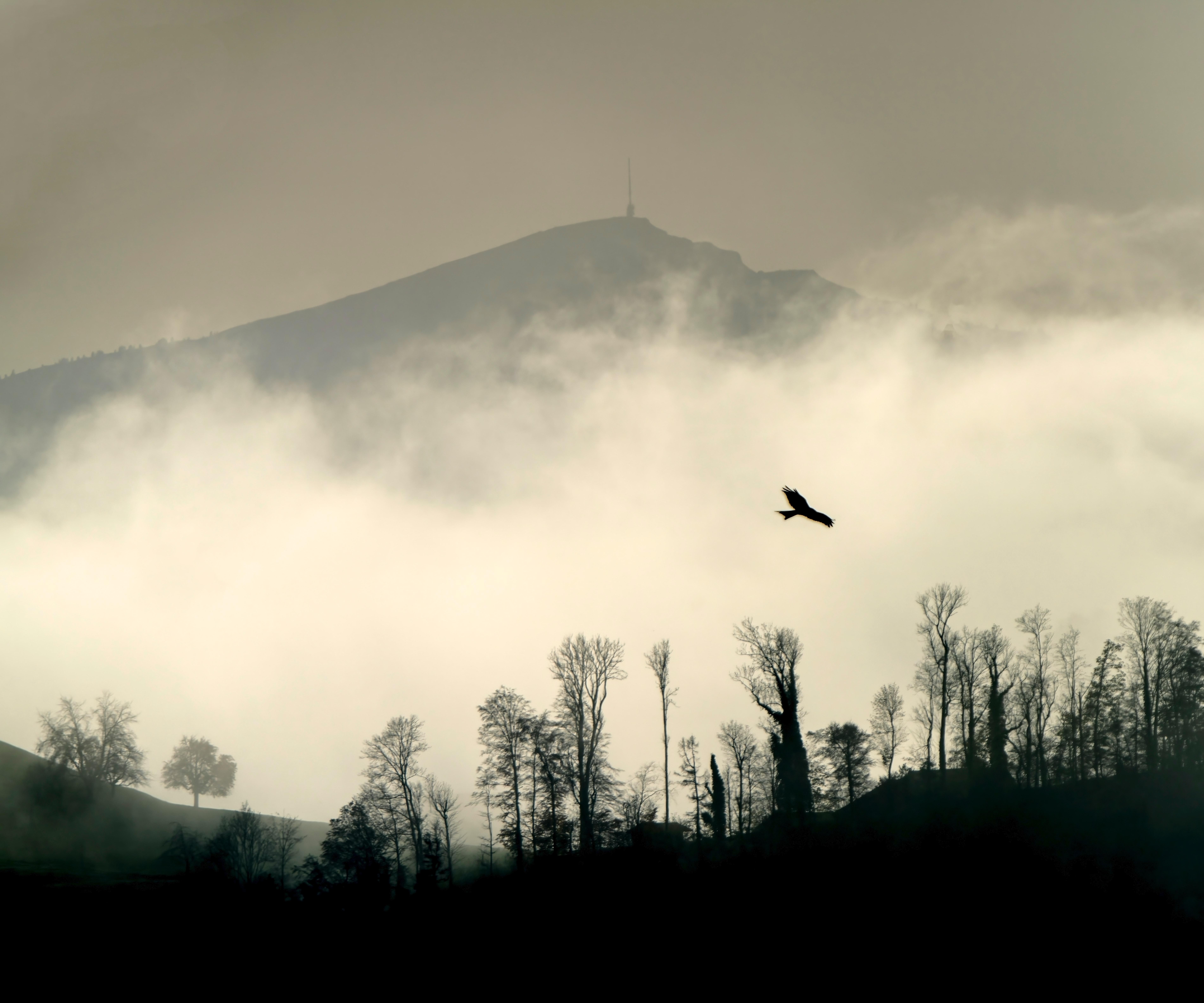 113907 免費下載壁紙 性质, 鸟, 轮廓, 剪影, 山, 戈拉, 云, 云端, 树 屏保和圖片