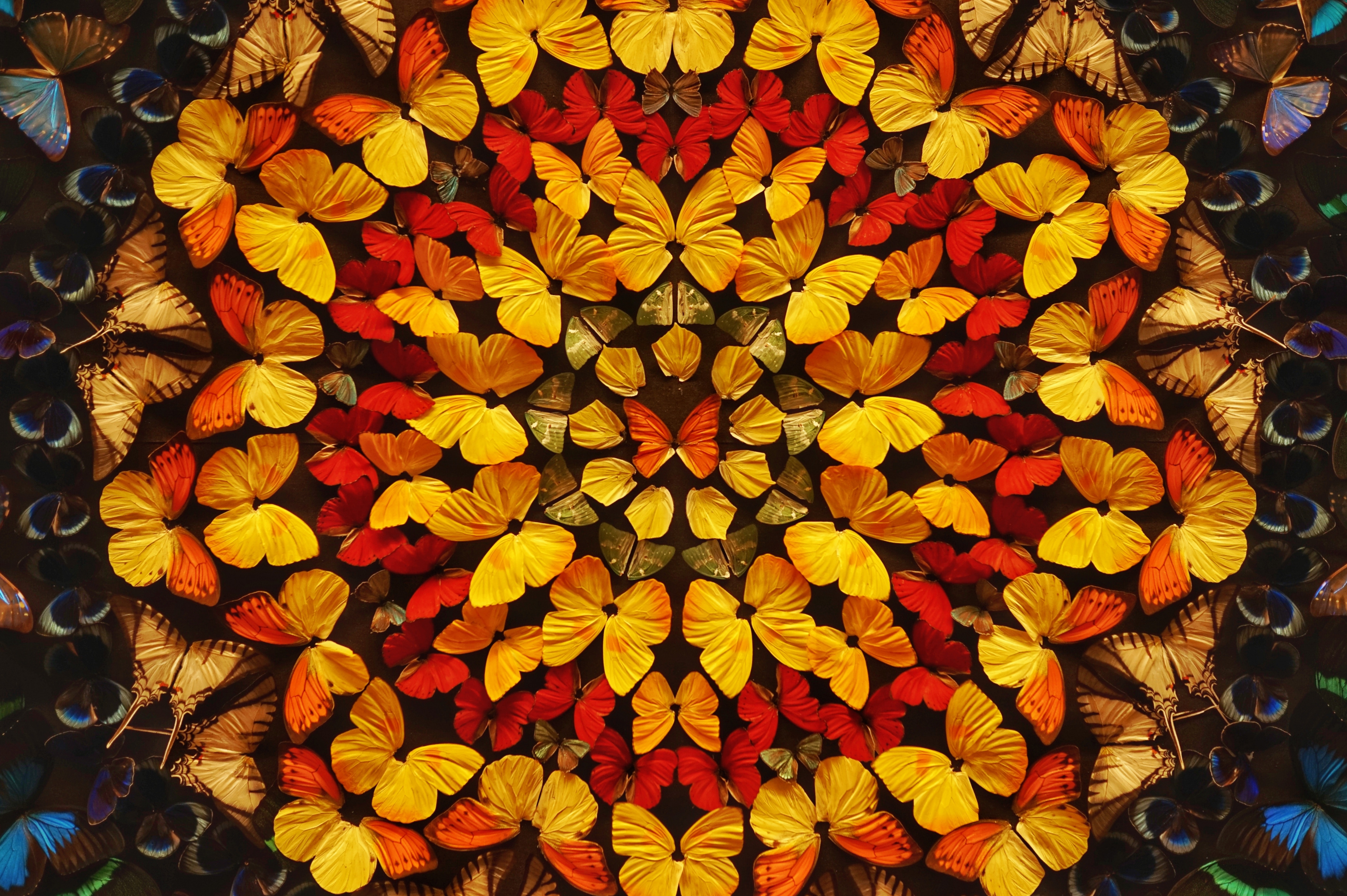 99989 Screensavers and Wallpapers Butterflies for phone. Download Miscellanea, Miscellaneous, Butterflies, Wings, Color, Coloured, Patterns pictures for free