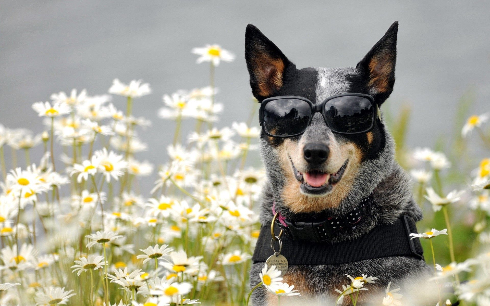 79460 download wallpaper Animals, Dog, Glasses, Spectacles, Muzzle, Flowers screensavers and pictures for free