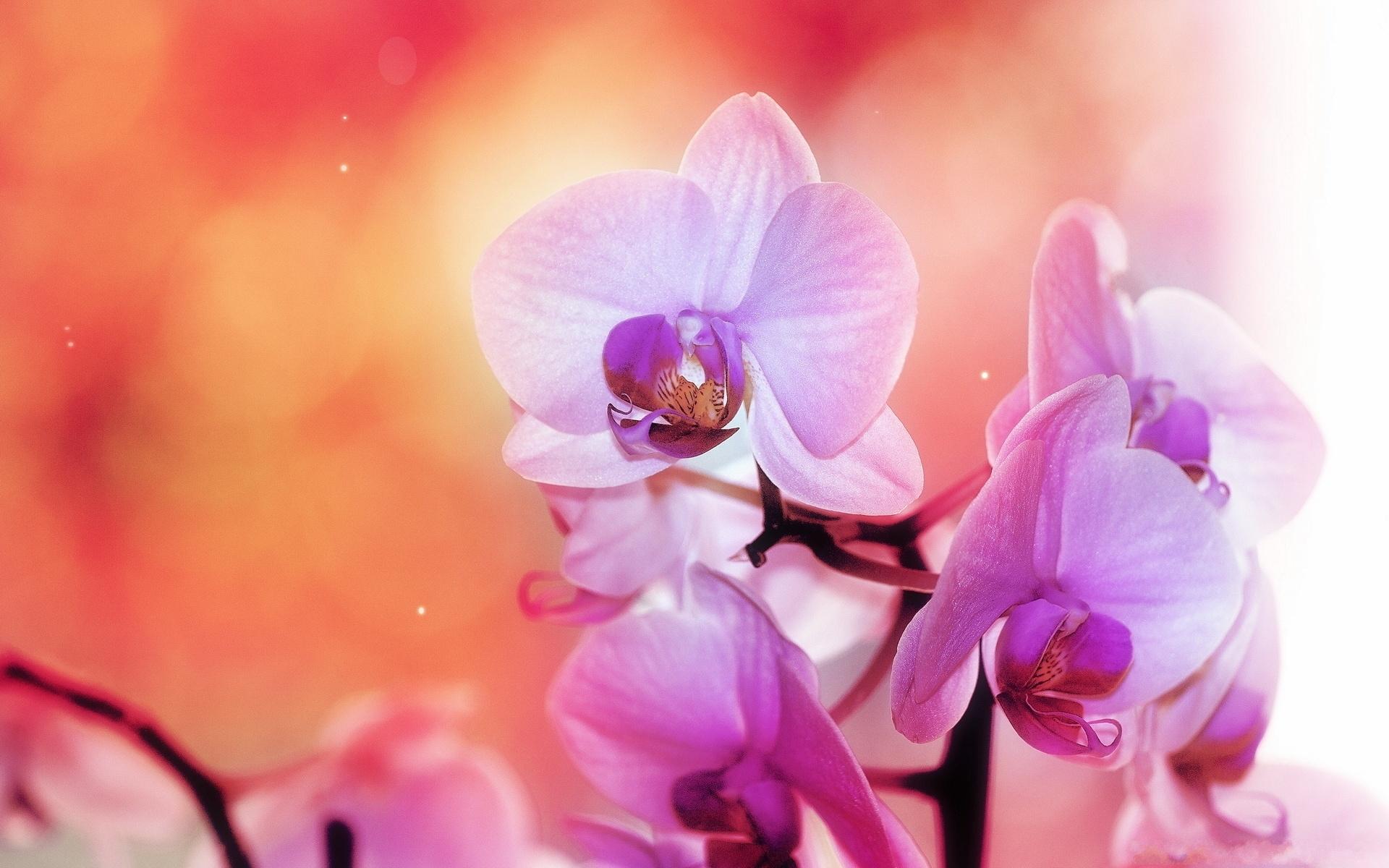 29274 скачать обои Растения, Цветы - заставки и картинки бесплатно