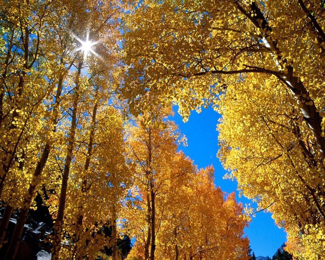 90109 скачать Желтые обои на телефон бесплатно, Природа, Осень, Листья, Солнце, Березы, Ветви Желтые картинки и заставки на мобильный