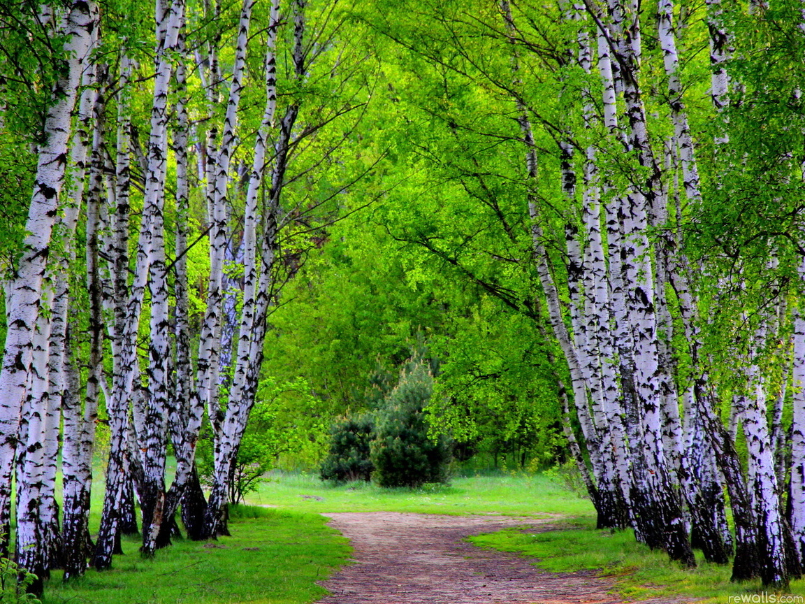 22360 download wallpaper Landscape, Trees, Roads, Birches screensavers and pictures for free