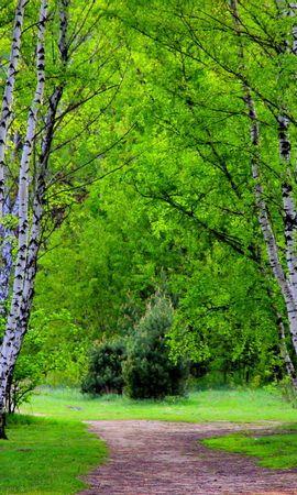 22360 скачать обои Пейзаж, Деревья, Дороги, Березы - заставки и картинки бесплатно
