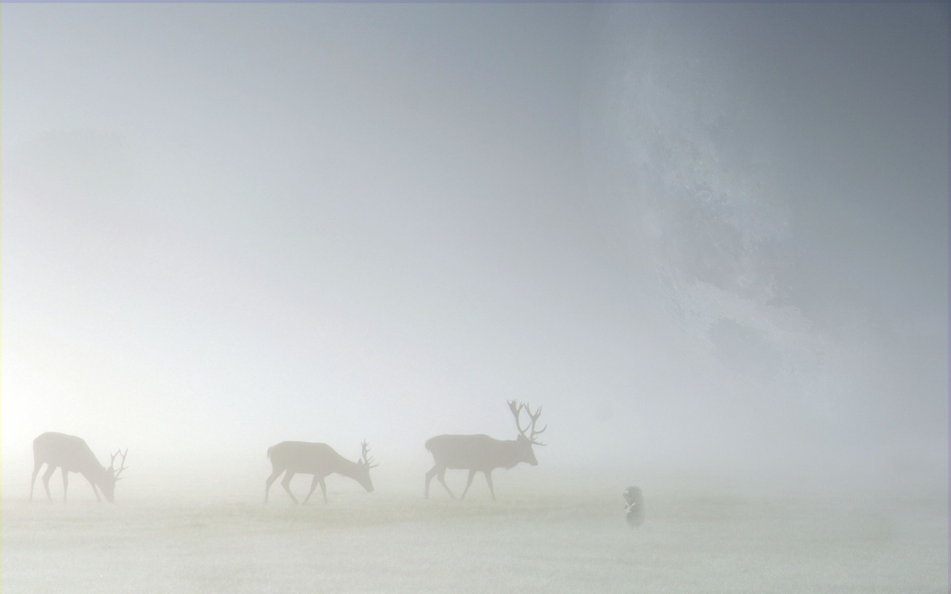 77626 download wallpaper Animals, Deers, Fog, Field, Silhouette screensavers and pictures for free