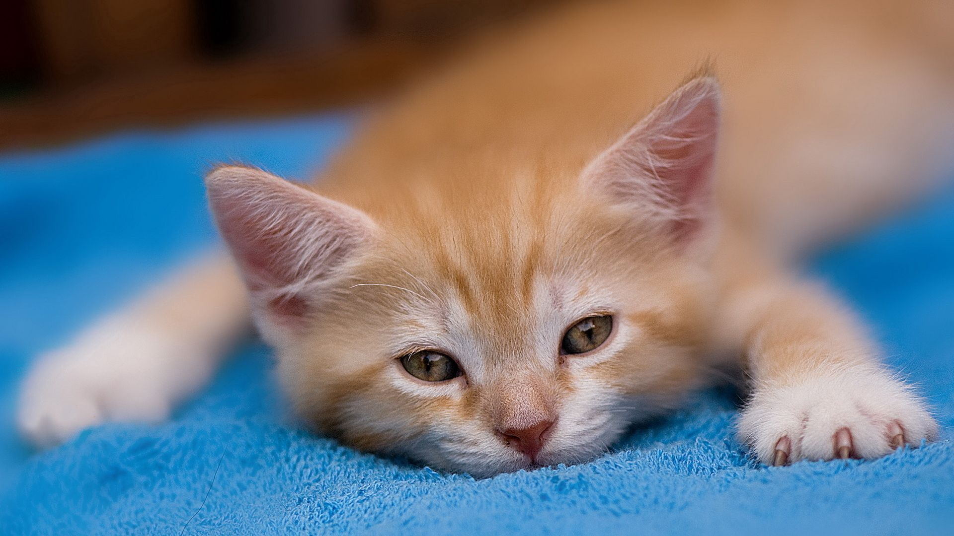 63749 download wallpaper Animals, Kitty, Kitten, Redhead, Sleep, Dream screensavers and pictures for free