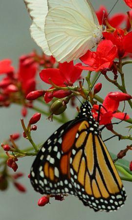29295 Salvapantallas y fondos de pantalla Insectos en tu teléfono. Descarga imágenes de Mariposas, Insectos gratis