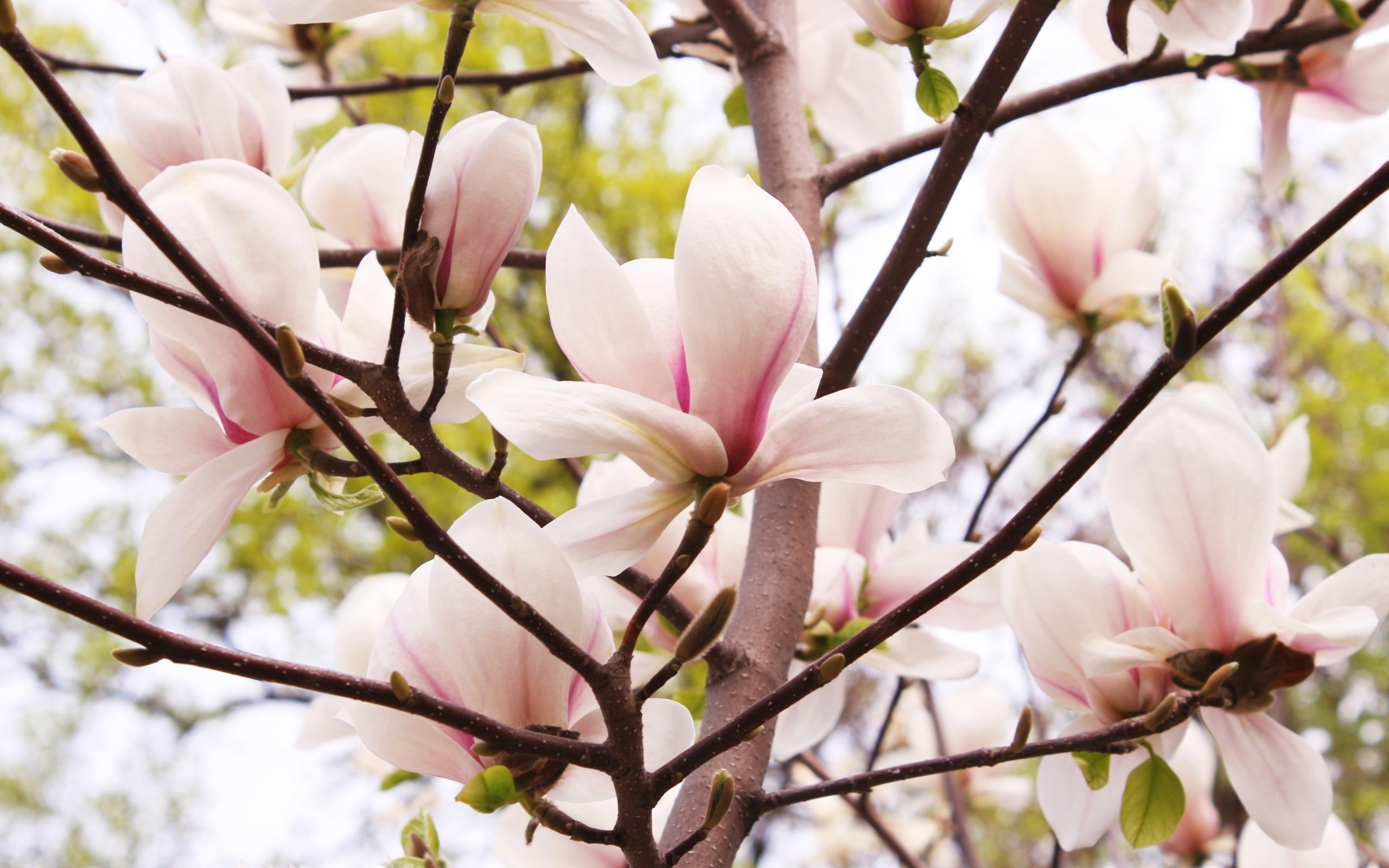 26087 скачать обои Растения, Цветы, Деревья - заставки и картинки бесплатно