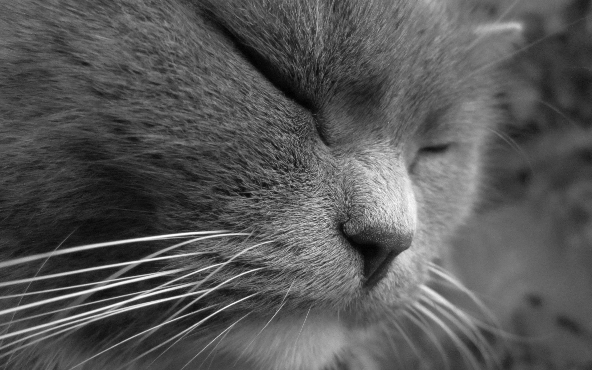 94963 download wallpaper Animals, Cat, Muzzle, Sight, Opinion, Sleep, Dream, Squint, Blink screensavers and pictures for free