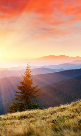 25971 télécharger le fond d'écran Paysage, Arbres, Montagnes, Sun - économiseurs d'écran et images gratuitement